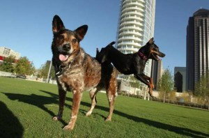 Fido's Finest Dog Training | Fido's Finest dogs performing at Klyde Warren Park in Dallas
