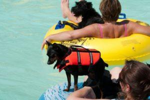 Fido's Finest Dog Training - Swimming Class