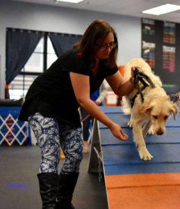 Audra Boekenhauer Allis, CPDT-KA - Fido's Finest Dog Training